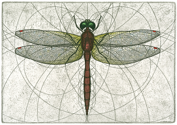 600x426 Ruby Meadowhawk Dragonfly Painting By Charles Harden