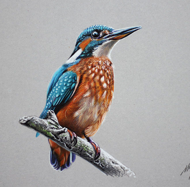 660x647 25 Beautiful Bird Drawings And Artworks From Around The World