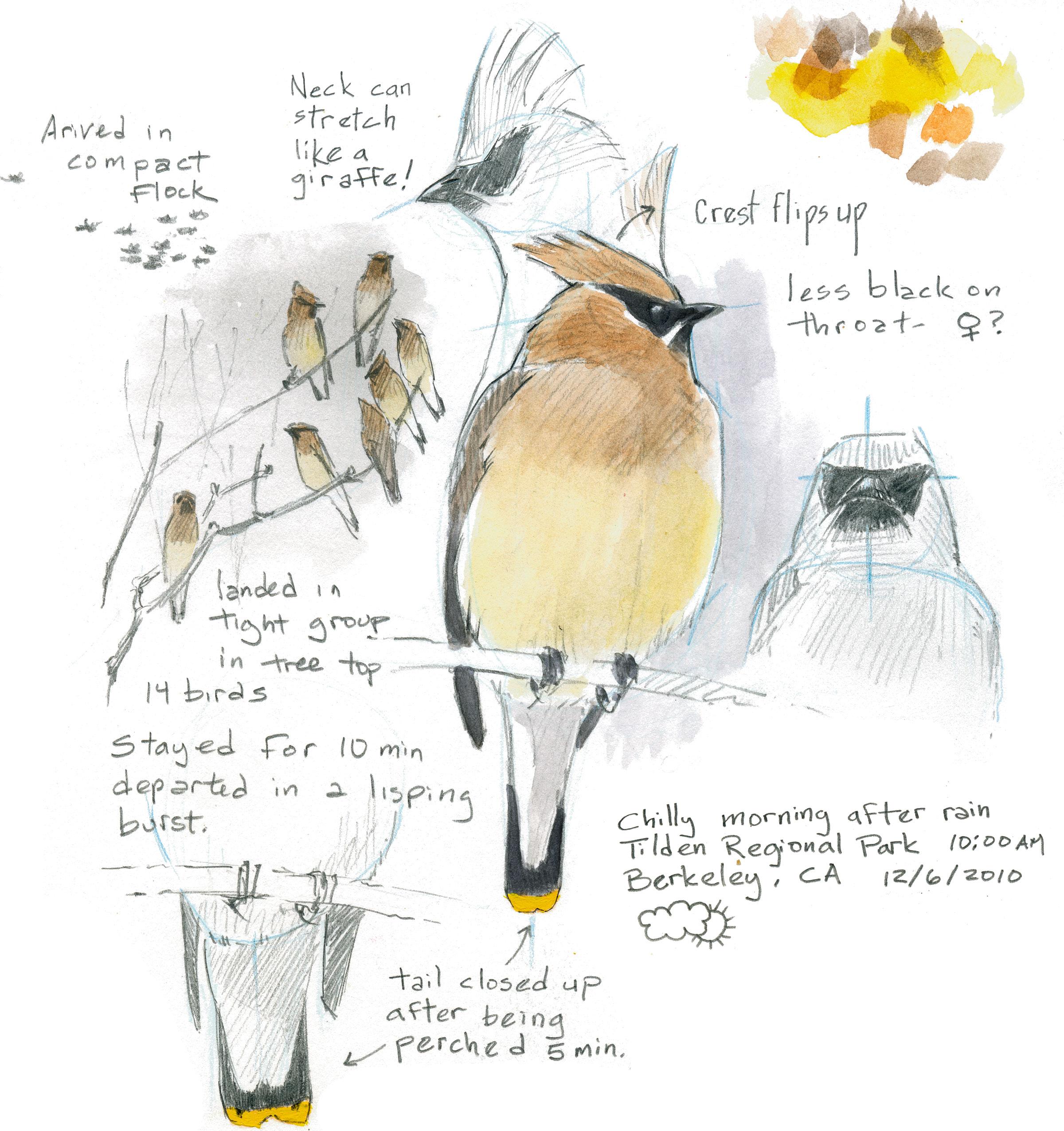 2400x2551 How To Draw A Bird Audubon