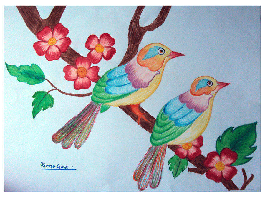 900x675 Pictures Beautiful Birds Drawing Images,