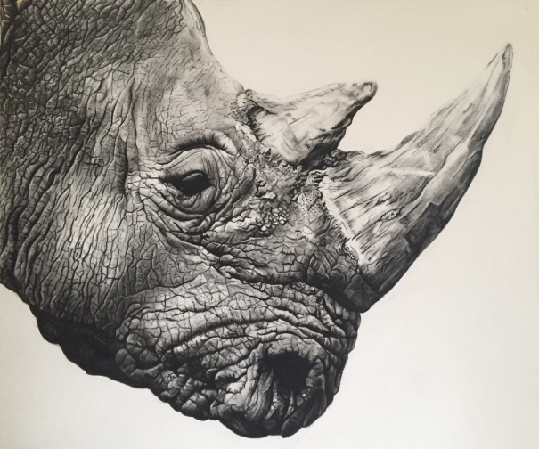 605x504 Northern White Rhino By Violet Astor. Drawing. Available For Sale