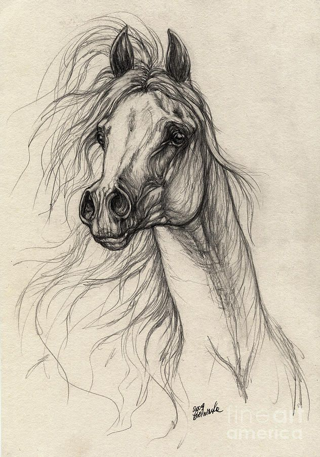 632x900 Photos Horse Pencil Drawings For Sale,