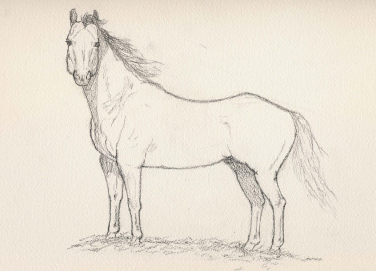 765x551 Horse Drawings