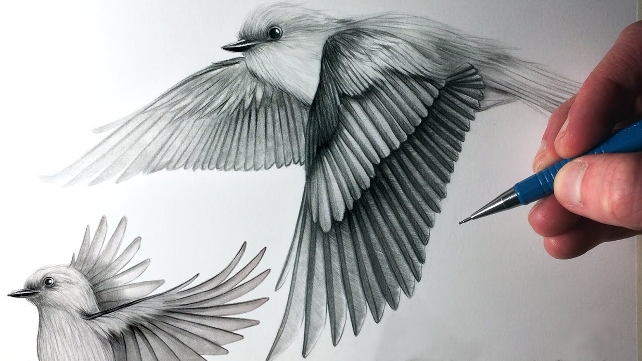 1280x720 How To Draw Birds Flying