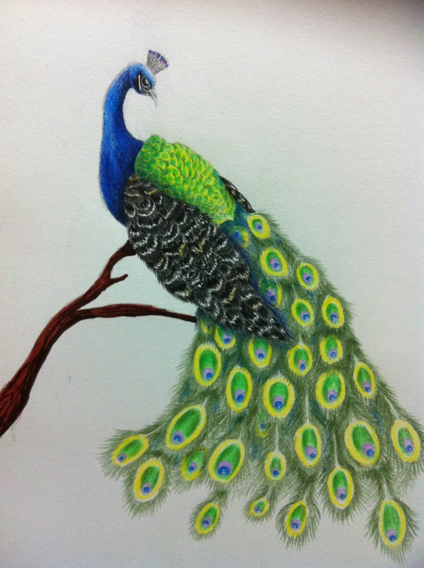 597x800 Bird Drawing Color
