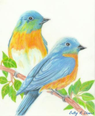 329x400 Colored Pencil Drawing Of Blue Birds