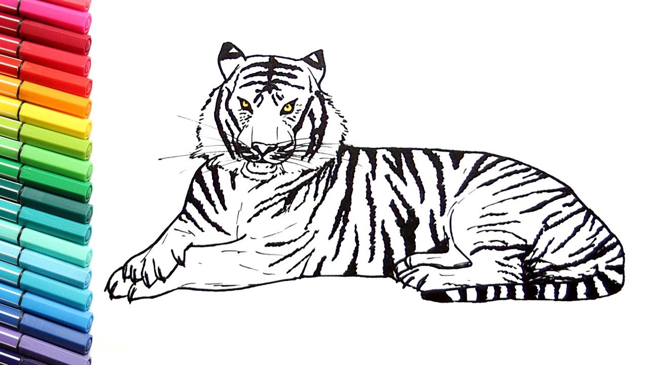1280x720 Drawing And Coloring A Tiger