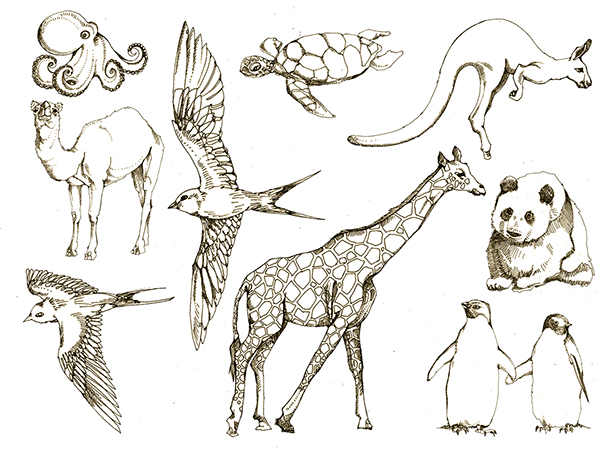 600x450 animals drawings