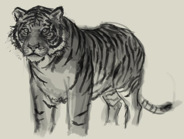 Line Drawing Of A Tiger S Face : Drawing picture of tiger at getdrawings free for personal