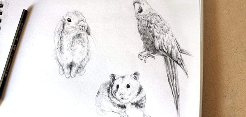 845x401 Tutorials For Drawing Realistic Animals In Our Free Eguide!