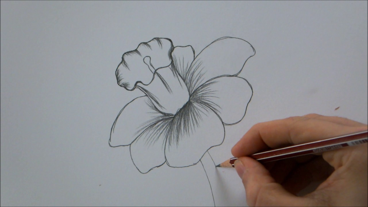 1280x720 How To Draw a Flower step by step In 6 Minutes!