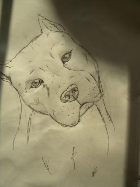 480x640 Draw Your Dog
