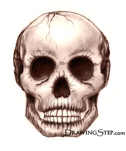 250x300 How To Draw Skulls Step By Step
