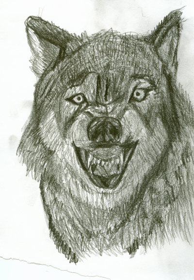Drawing Pictures Of Wolves At Getdrawings Com Free For Personal