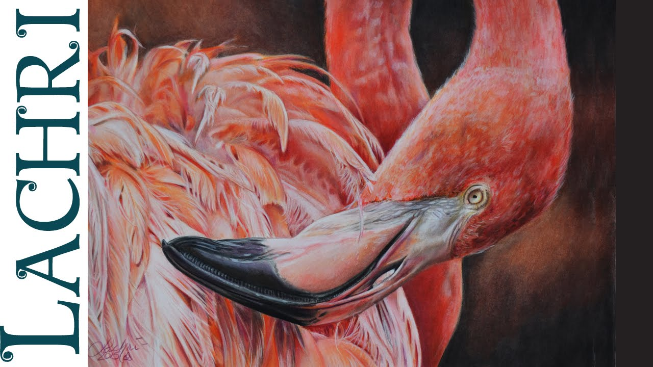 1280x720 Drawing A Flamingo In Colored Pencil