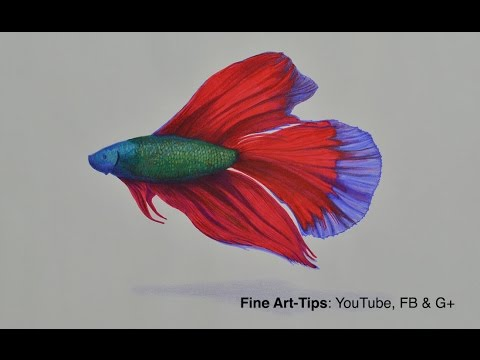 480x360 How To Draw A Beta Fish With Color Pencils And Markers