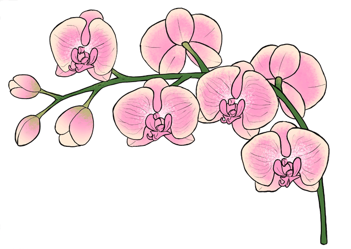 700x497 How To Draw Flowers The Sexy And Sultry Orchid