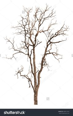 236x377 Silhouette Black Dry Tree Isolated On White Background.