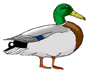 326x234 How To Draw Ducks Drawing Tutorials Amp Drawing Amp How To Draw