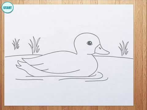 480x360 How To Draw A Duck For Kids
