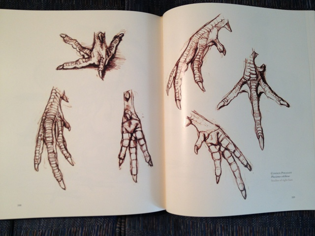 640x480 Common Pheasant Feet The Unfeathered Bird Animal Anatomy