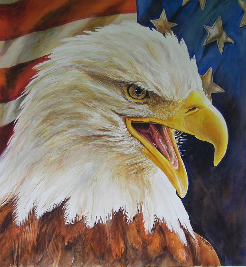 800x869 Eagle Head And Flag Kim Pearce Paintings Amp Drawings