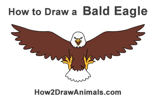 500x315 How To Draw A Bald Eagle (Cartoon)