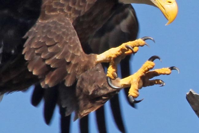 648x432 Talons Of The Eagle Following Eagle Talons Betrayal Play