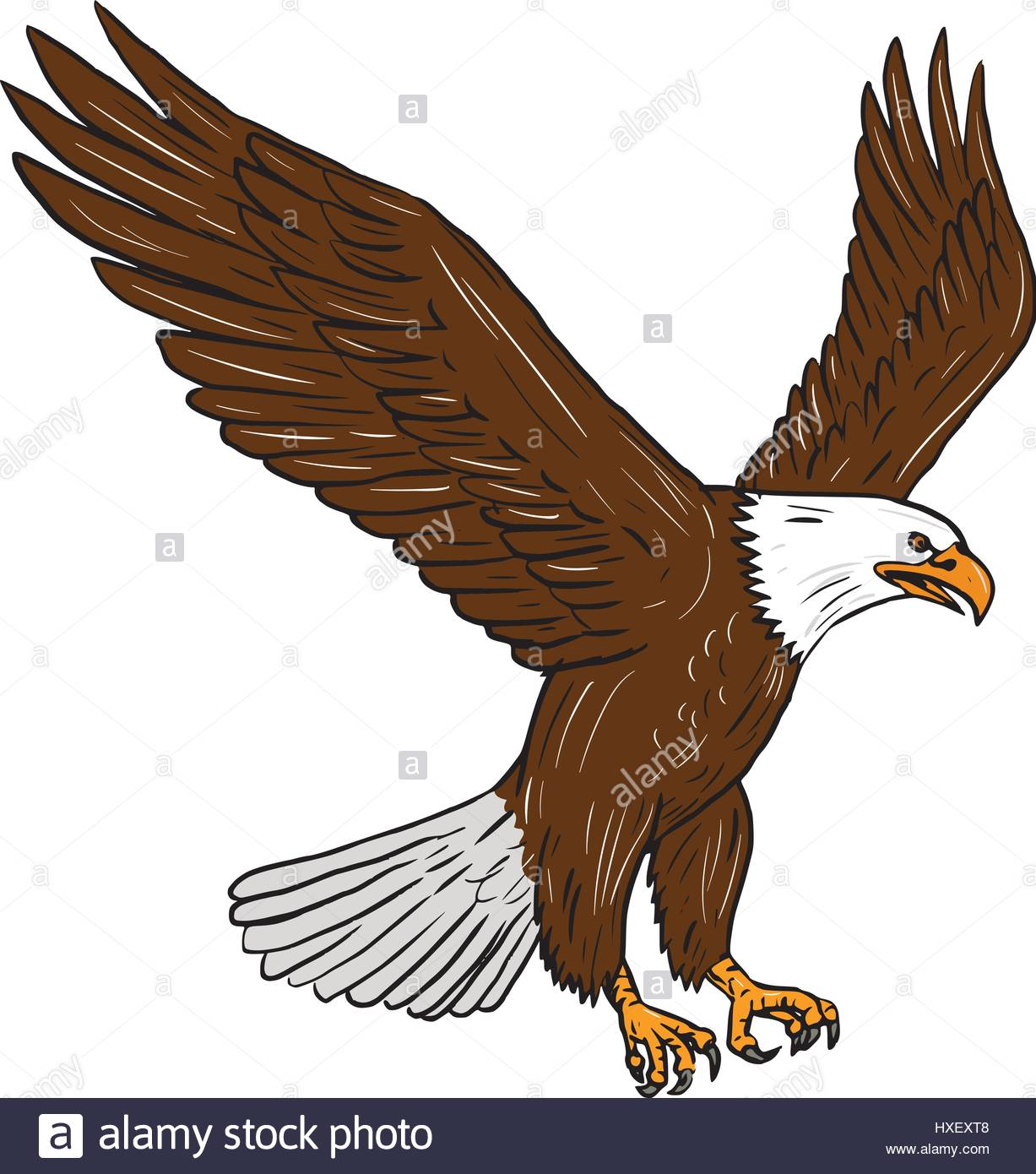 1227x1390 Drawing Sketch Style Illustration Of Bald Eagle Flying Wings