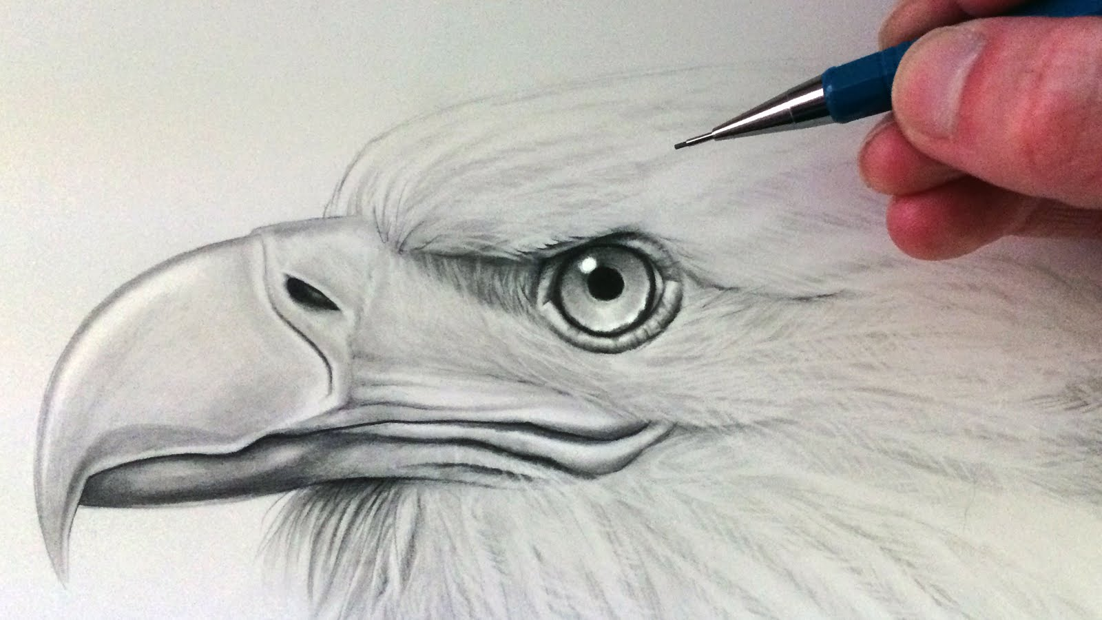 1600x900 How To Draw An Eagle Head