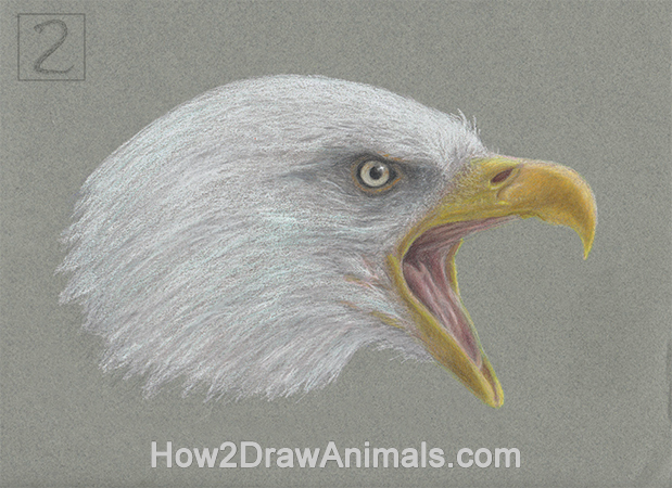619x450 Special Bald Eagle Drawing