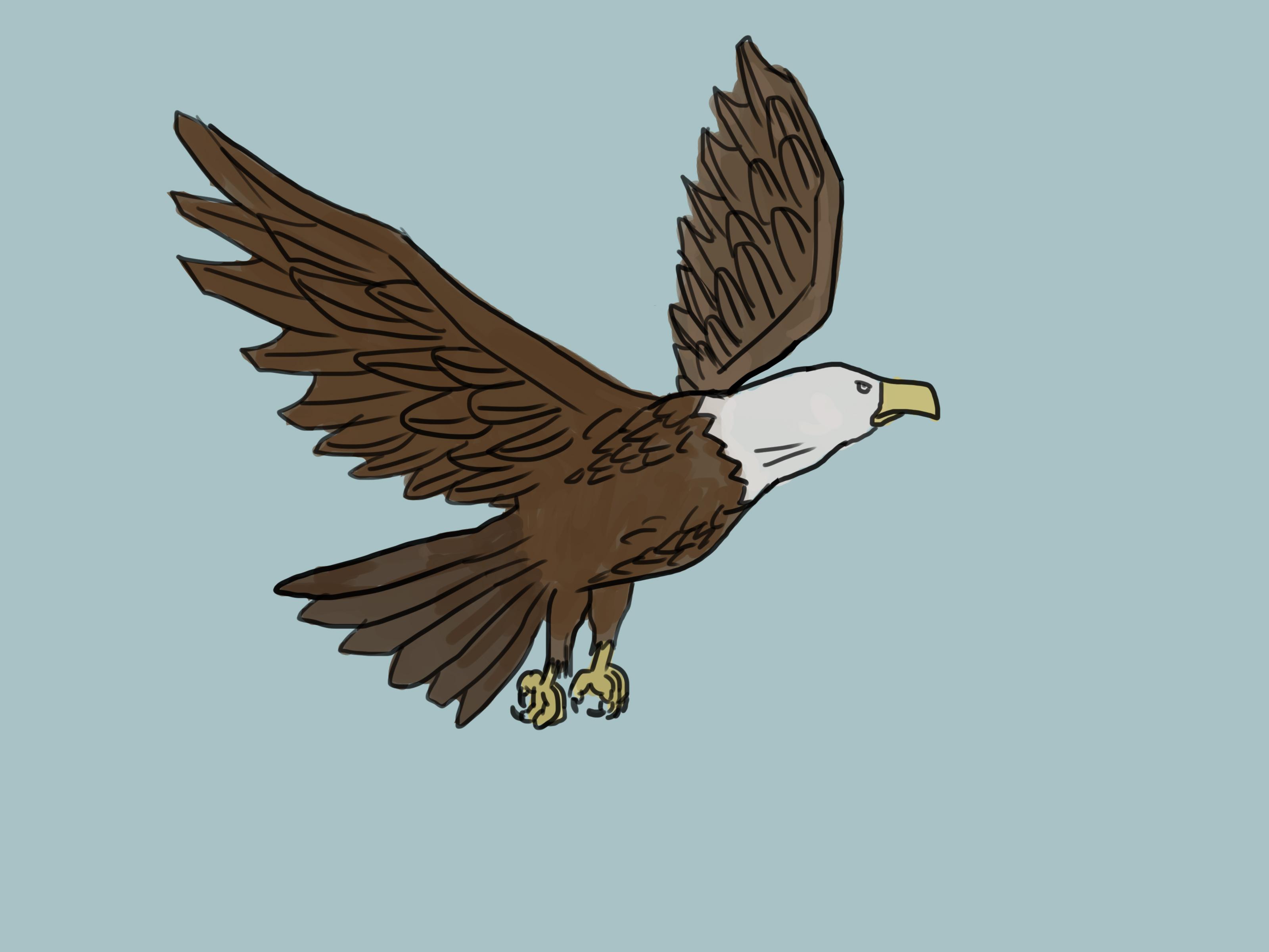 3200x2400 4 Ways To Draw An Eagle