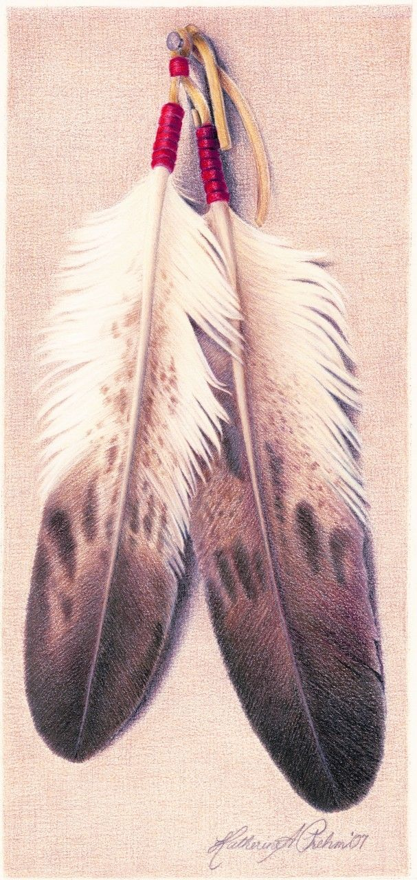 Eagle Feather Drawing At Getdrawings Free For Personal Use