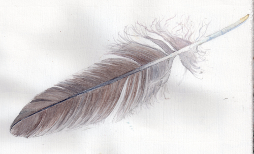 Line Drawing Feather : Eagle feather drawing at getdrawings free for personal use