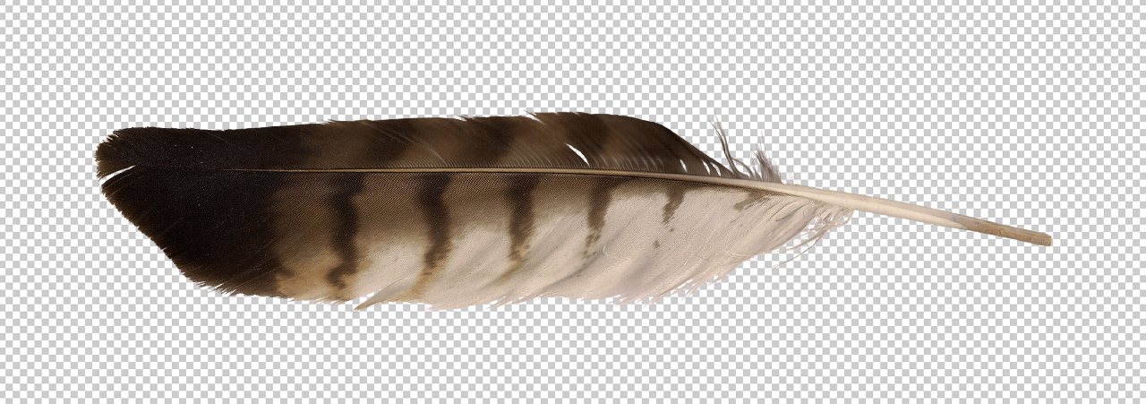 1280x451 Red Tailed Hawk Feather
