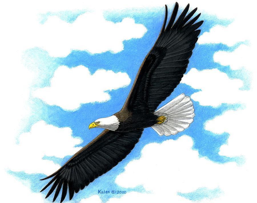 900x711 Bald Eagle In Flight Painting By Kalen Malueg