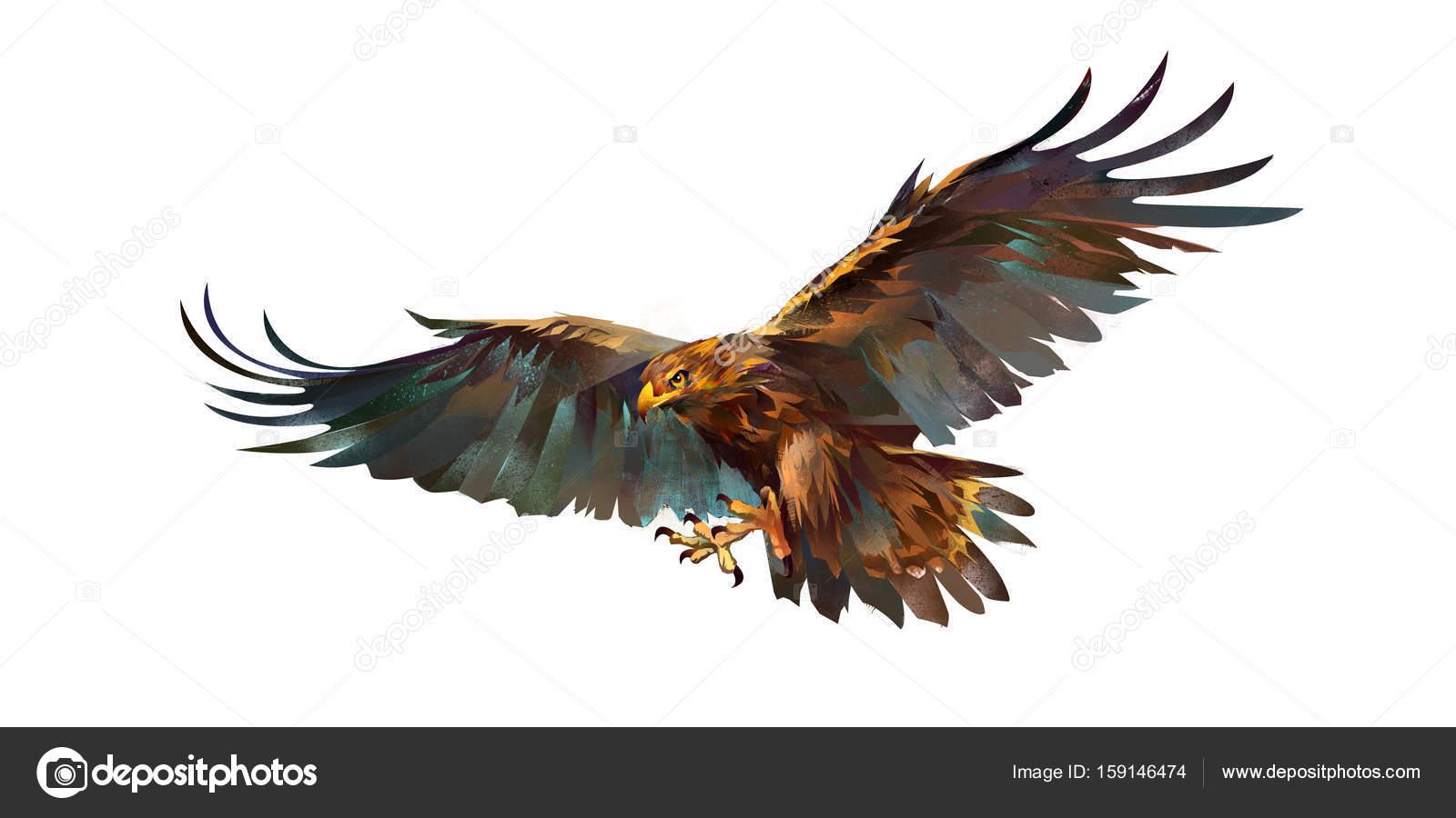 1600x900 Drawing Flying Eagle On White Background Stock Photo Khius