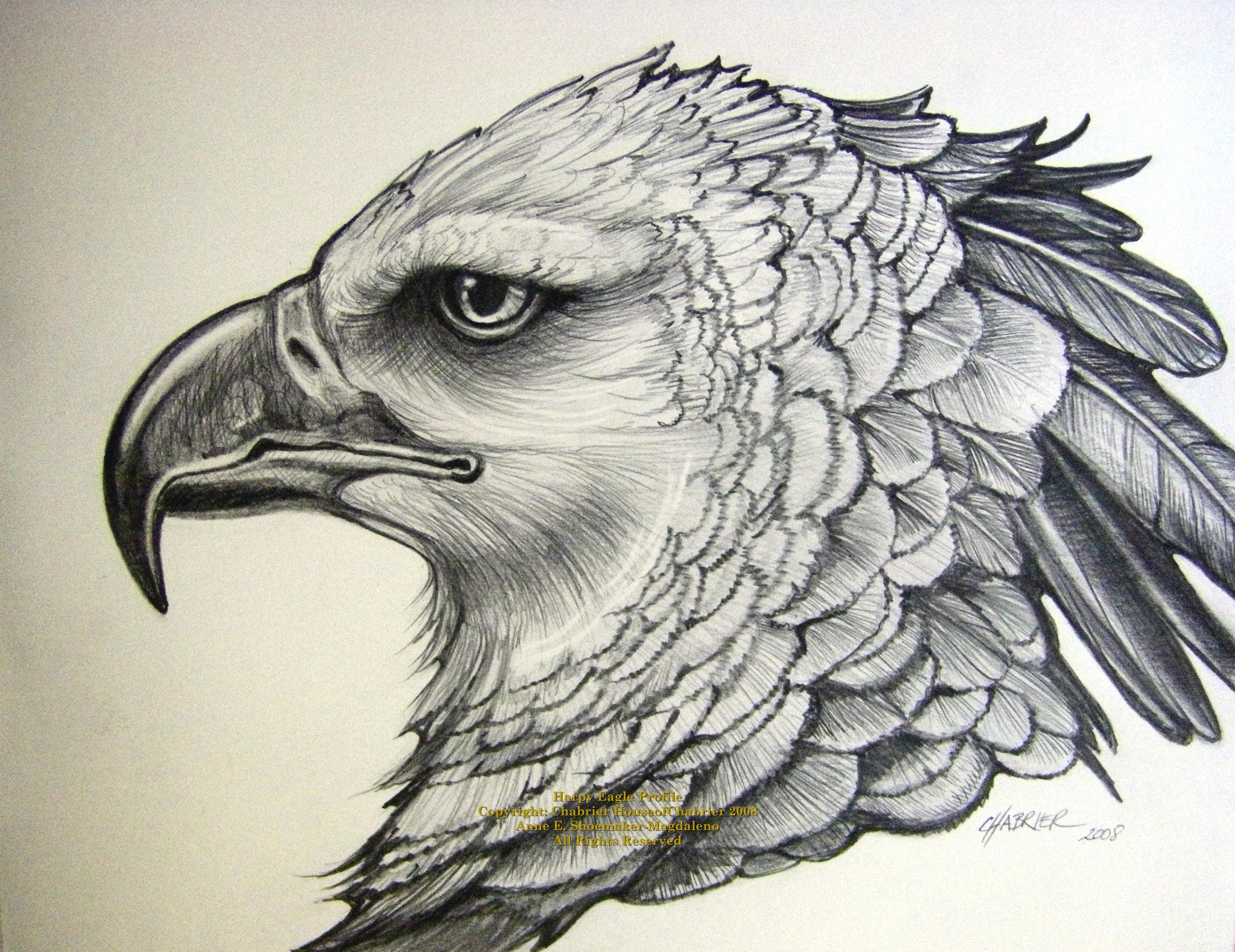 3008x2320 Eagle Flying Pencil Sketch Pencil Drawings Of Eagles In Flight 9