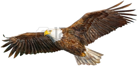450x215 Eagle Flying Stock Photos. Royalty Free Business Images