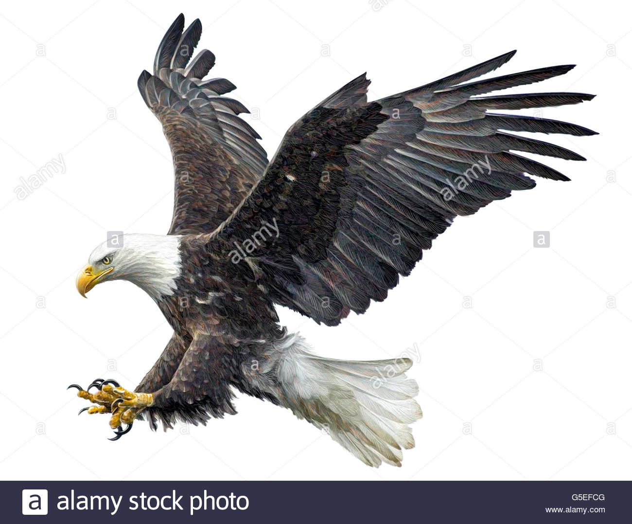 1300x1077 Eagle In Flight Drawing Bald Eagle Flying Cut Out Stock Images