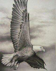 239x300 Eagle In Flight Drawings Fine Art America