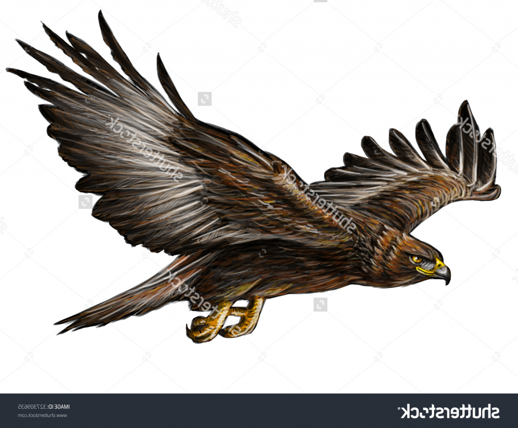1024x846 Pencil Drawings Of Eagles In Flight Eagle Flying Drawing Eagle