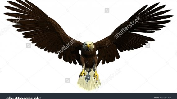 570x320 Pencil Drawings Of Eagles In Flight Ruben39s Art How To Draw