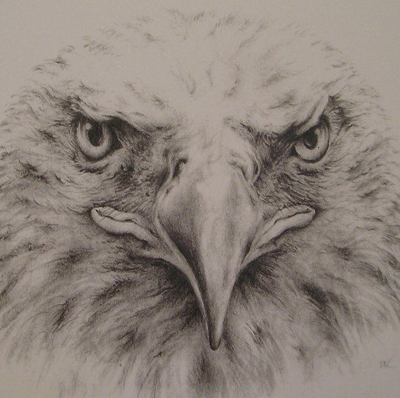570x568 Bald Eagle Pencil Drawing With Mat Eagle Drawing, Bald Eagle