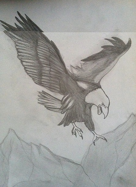 445x609 eagle pencil drawing charcoal drawing drawing sketch bird of
