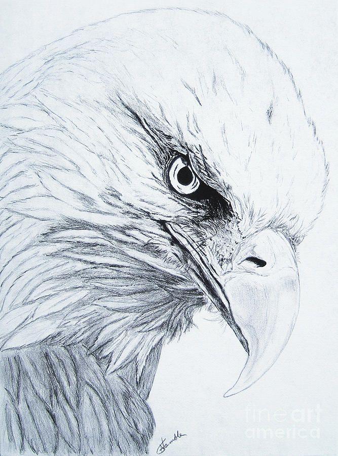 667x900 gallery eagle eye hd pencil sketch
