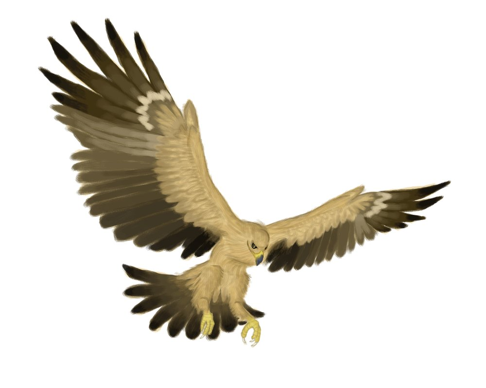 Eagle Wings Drawing at GetDrawings.com | Free for personal use Eagle ...