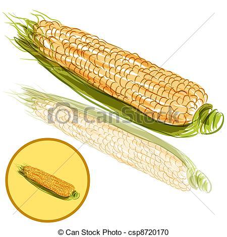 450x470 An Image Of A Ear Of Corn. Vector Clipart