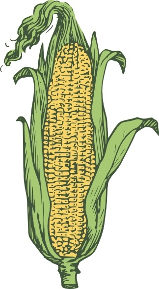 324x588 Ear Of Corn Colored Clip Art Free Vector In Open Office Drawing