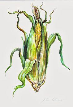 236x347 Ear Corn Illustrations And Clipart. 365 Ear Corn Royalty Free